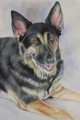 "Heidi, watercolour on paper, 15x22"". Commissioned. Artist Lianne Todd"