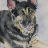 "Heidi, watercolour on paper, 15x22"". Commissioned. Private Collection. Artist Lianne Todd"