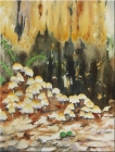 "Toadstools. Watercolour on paper. 11x15"". Lianne Todd. $280"
