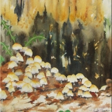 "Toadstools. Watercolour on paper. 11x15"". Artist Lianne Todd. SOLD Private collection."