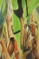 "Lost in the Corn. Watercolour on Gessoed Paper. 15x22"". Lianne Todd. $450"