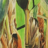 "Lost in the Corn. Watercolour on Gessoed Paper. 15x22"". Artist Lianne Todd. $475."